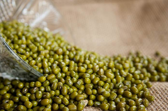 varietas kacang hijau