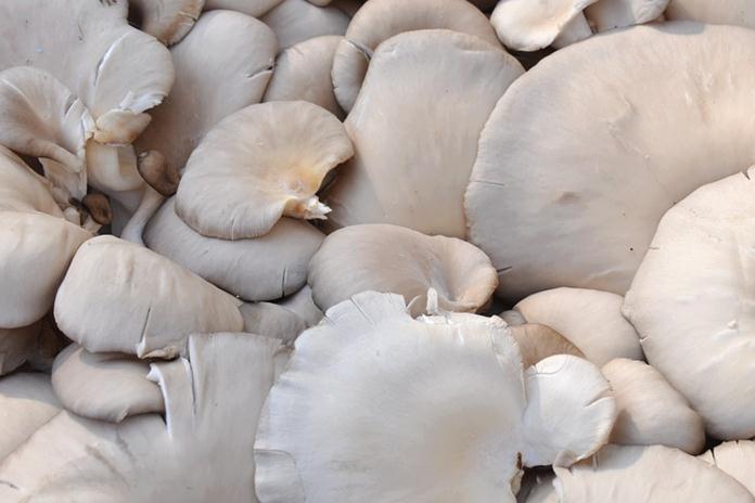 Keuntungan budidaya jamur