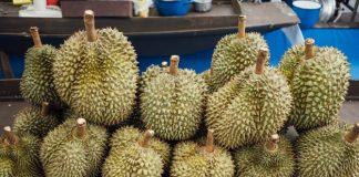 Memilih buah durian