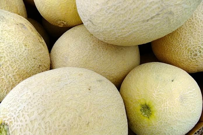 melon organik