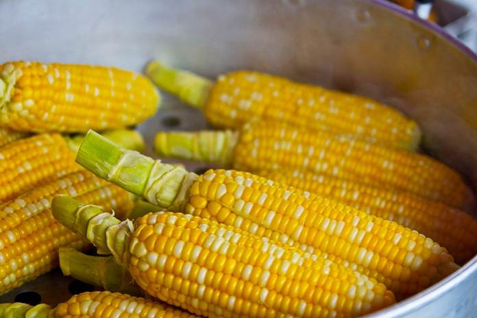 kecambah jagung