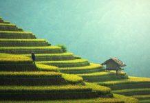 pertanian dari kecamatan