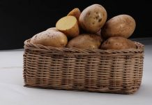 benih kentang