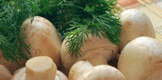 bibit jamur F2