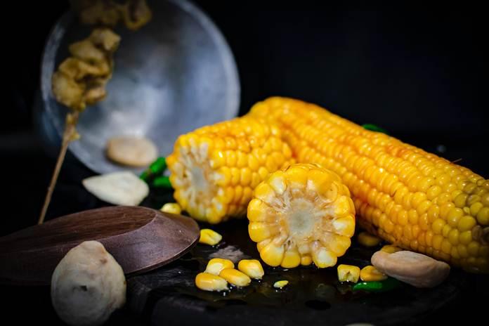 benih jagung berkualitas