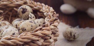 ternak puyuh telur