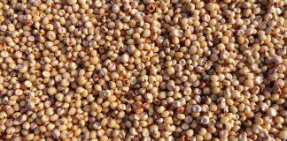 ekspor tanaman pangan
