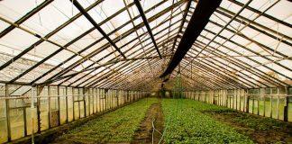 sayuran organik di greenhouse