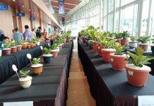 tanaman hias anthurium