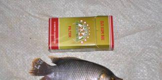 gurami ukuran bungkus rokok