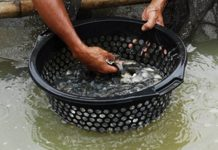 kolam pijah ikan nila