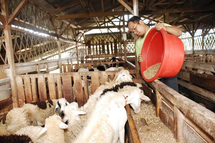 keungulan susu kambing