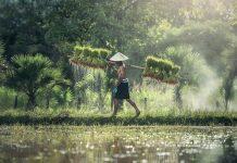 peningkatan kesejahteraan petani