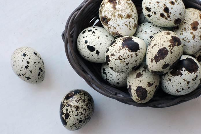 pemasaran telur puyuh