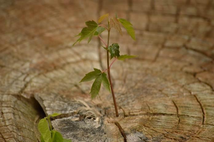 tanaman hutan
