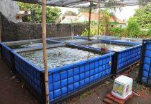 air kolam ikan lele