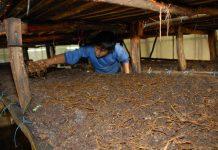 masalah budidaya jamur tiram