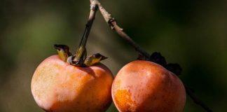 jenis buah eksotik