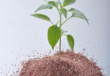 jenis bibit tanaman