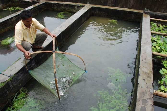 usaha budidaya ikan