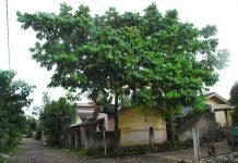 menanam pohon di pekarangan