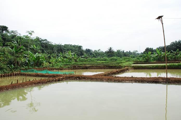 lahan menjadi kolam