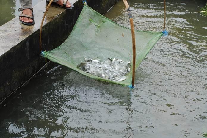 pengangkutan ikan