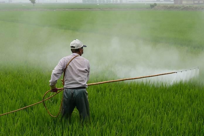penggunaan insektisida