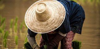 daya beli petani