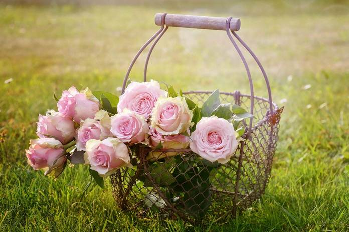 kualitas bunga mawar
