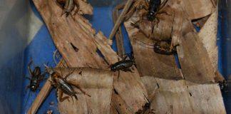 peran serangga dalam ekosistem
