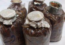 daya simpan bibit jamur