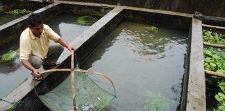 lokasi budidaya ikan nila
