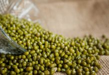 hama kacang hijau