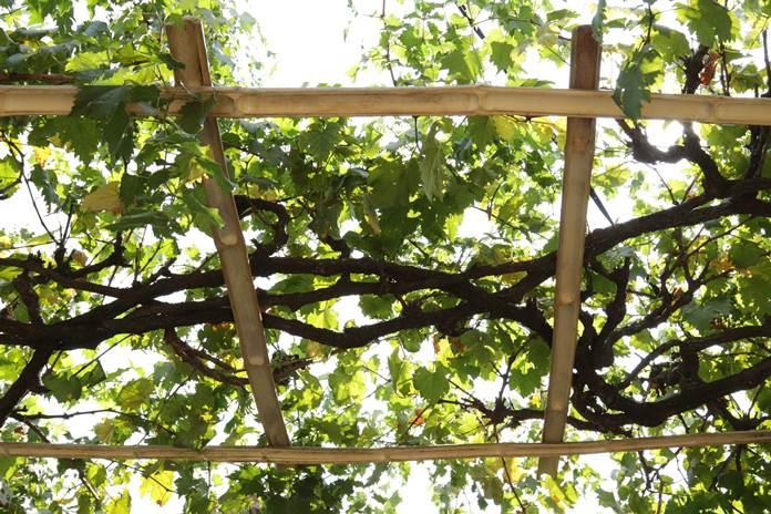kontinuitas pembuahan pohon