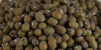 ekspor kacang hijau