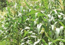 data pertanian