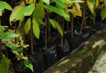 karakteristik benih hutan