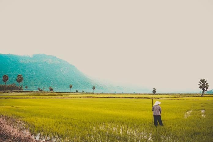 Pertanian dan Kesiapan Petani Menghadapi Perubahan Iklim - Kesiapan Petani dan Sektor pertanian dalam Menghadapi Perubahan Iklim