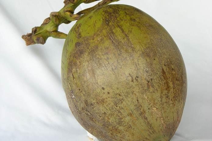 produk buah kelapa