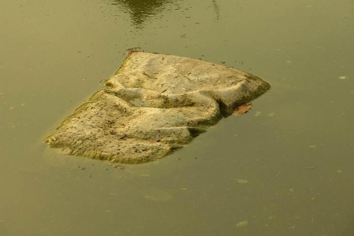 pemupukan kolam gurami