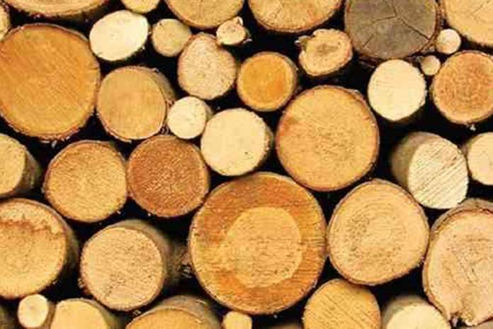 kayu sengon