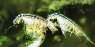 zooplanktont