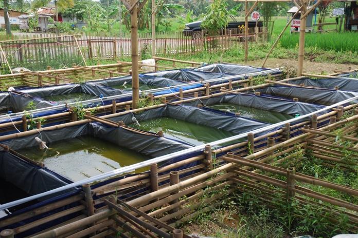sumber air untuk budidaya