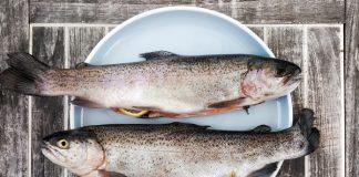 segmentasi usaha budidaya ikan