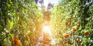 kebun organik
