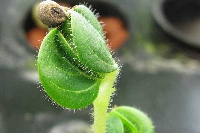 menyemai bibit tanaman