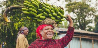 menanam pohon pisang