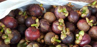 ekspor buah manggis