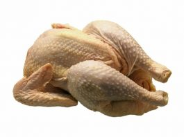 harga ayam potong hidup